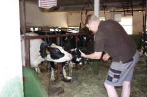 Akim auf Flirtkurs mit einer Kuh