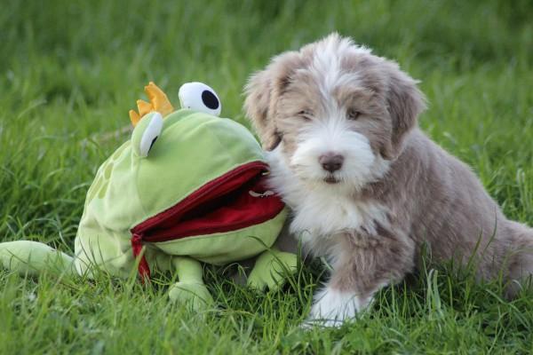 Frosch  1