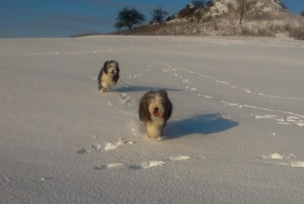 George im Schnee 2