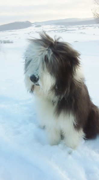George im Schnee