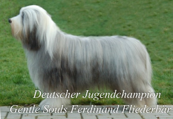 KasselFlieder1