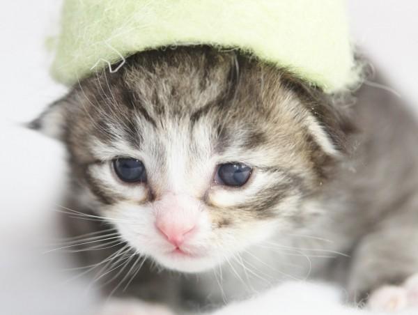 Kitten 12