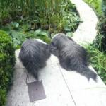 Monty und Bayou